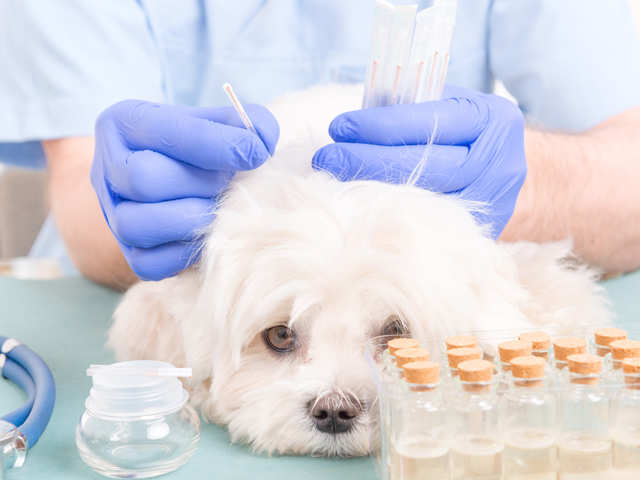 dog-heal-accupuncture_GettyImages