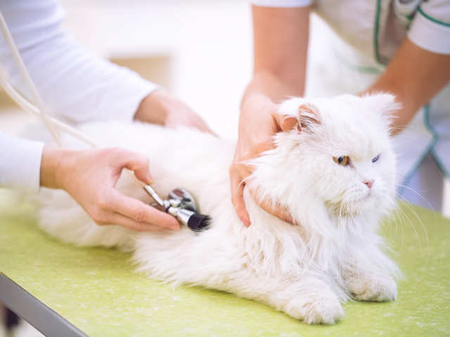 pets-cat-heal-accupuncture_GettyImages