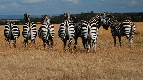 Mallya loves the wildlife and has made trips to Botswana, Masai Mara in Kenya.