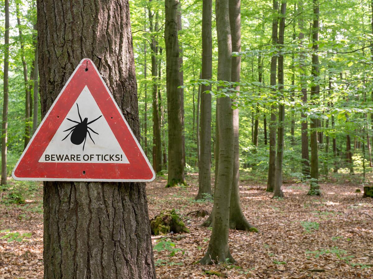 ticks-Lyme disease_iStock