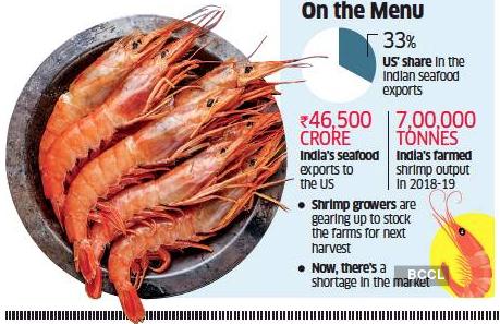 shrimps-graph