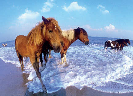 Assateague Island National Seashore,Maryland