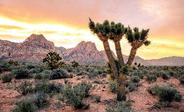 Spring Mountains National Recreation Area, Las Vegas.