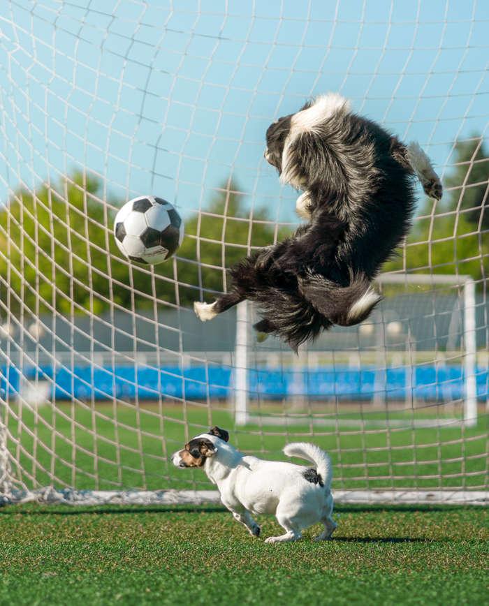 dog-football-iStock