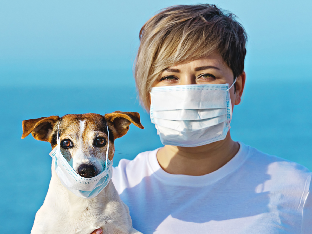 covid: Scientists believe trained dogs will start sniffing out coronavirus  patients by July - The Economic Times
