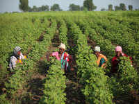 How Arvind Ltd is putting a spin on cotton cultivation and farmer fortunes