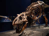 What kept Tyrannosaurus rex cool? A giant AC inside its head