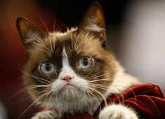 "Internet star ""Grumpy Cat"" dies at the age of 7"