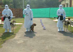 Watch: Indian Army canines get training for COVID-19 real-time detection