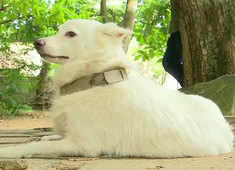 Kerala man abandons pet dog, leaves bizarre note attached to collar