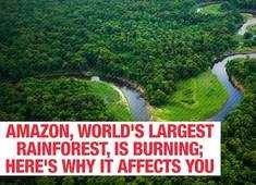 Amazon, world's largest rainforest, is burning; here's why it affects you