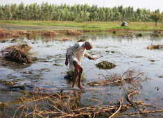 Strong monsoon isn't always good news for farmers