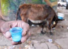 No kidding: Donkey's milk is the new elixir