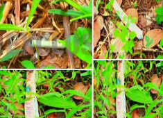 Explosives seized from forest area in Kerala, agencies suspect PFI link