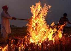 Punjab: Despite govt ban, stubble burning continues unabated in Amritsar