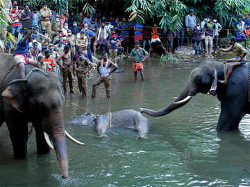 Kerala elephant tragedy: Another jumbo suspected to have been killed in similar fashion
