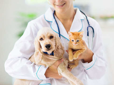 What pet insurance covers, how much it costs and the products on offer