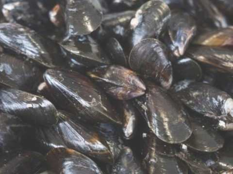 Super-filter mussels can help beat water pollution