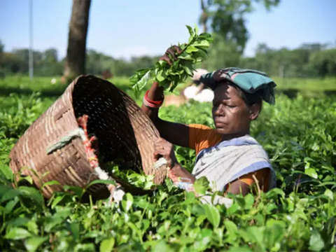 Assam Company unveils new technologies to provide fillip to tea industry