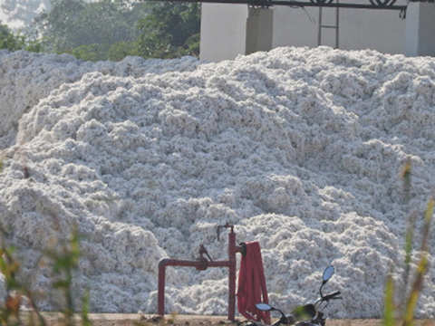 India's cotton exports likely to rise 50% this year to 75 lakh bales this year