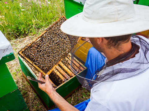 Government to give status of farmers to landless beekeepers