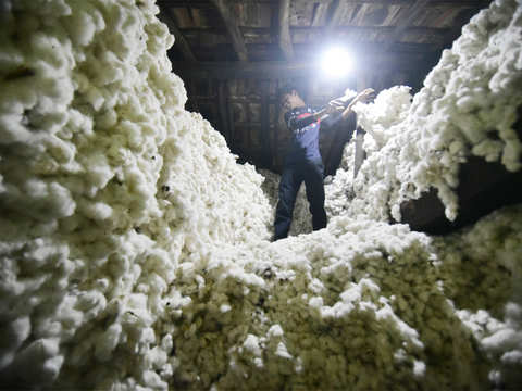 Indian cotton prices increase 5% in a month; trade expects upward trend to continue