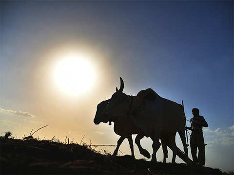After good rainfall, monsoon deficiency drops to 9 per cent: IMD