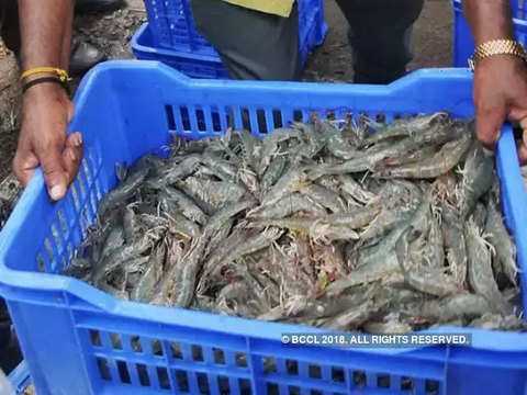 Seafood exports may shrink due to low shrimp prices