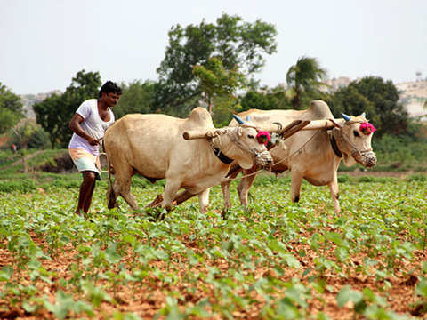 Farming & mining hit primary sector growth in UPA era