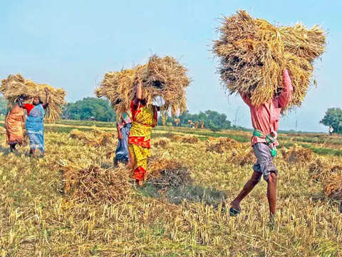West Bengal: Paddy procurement scheme witness 8 time increase