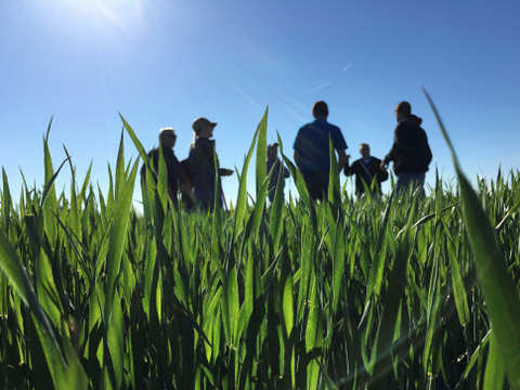 Soya, mustard, chana rise as farmers expect higher MSP