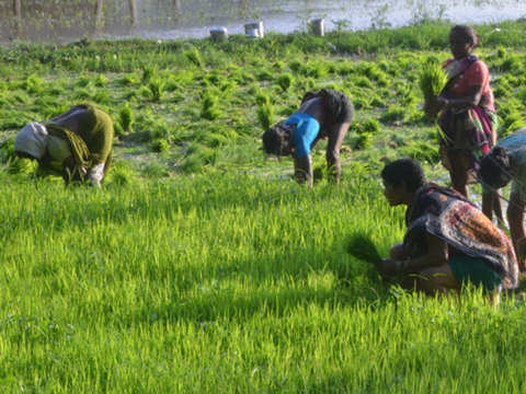 Why income support, not farm loan waiver, may be better for all
