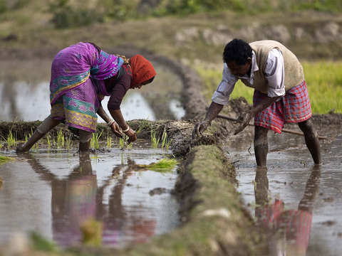 View: Direct income support for farmers in Budget 2019- An idea whose time has come