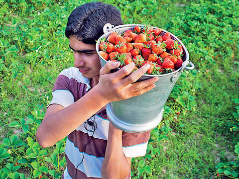 A berry old story: How strawberries found its most delicious avatar in India when combined with basundi