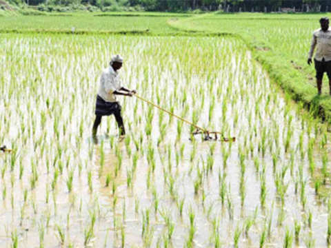PM-KISAN to provide multiple benefits to farmers: CEA