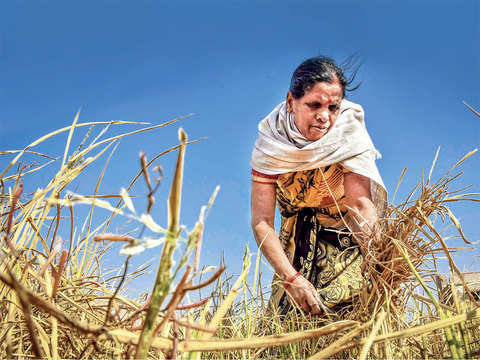 67.82 lakh farmers miss benefits as states didn't upload details on the PM-KISAN portal