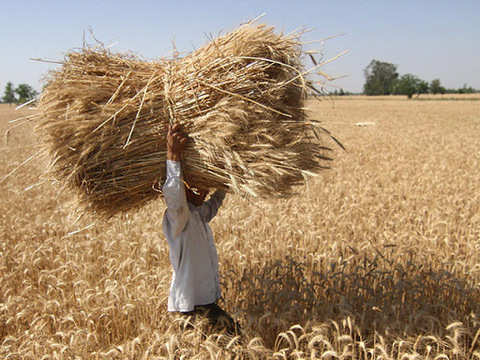 Set up fund for farmers: Sebi to Commexes