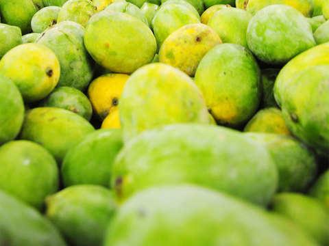 Kochi man grows 40 mango varieties on rooftop