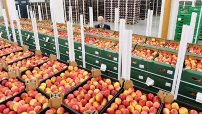 Cheaper imports dent Himachal Pradesh's apple business - The