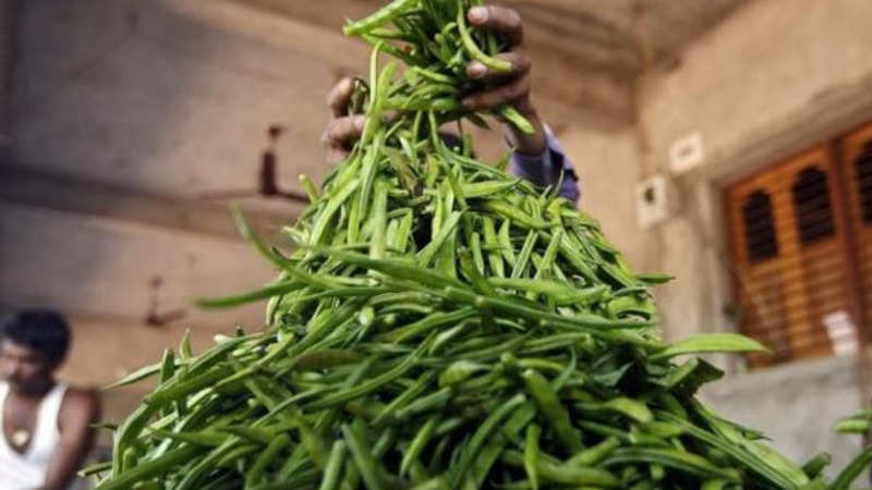 Guar seed area to fall as prices dip drastically on less