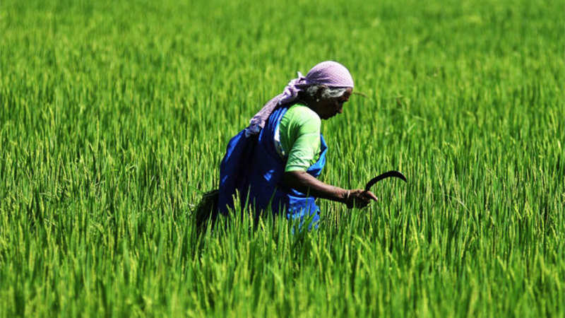 Smart Farmers of Bihar' use technology to deal with climate