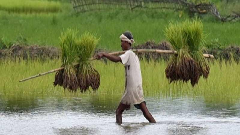 Koinor Eetbank Bottom.Basmati Rice Rice Stocks Trade Higher Kohinoor Foods Krbl Chaman