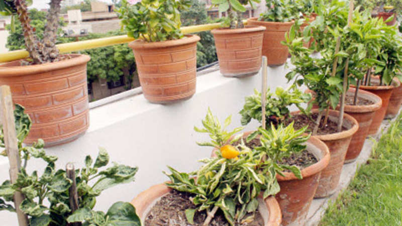 Amazon introducing more options for online live plant category on