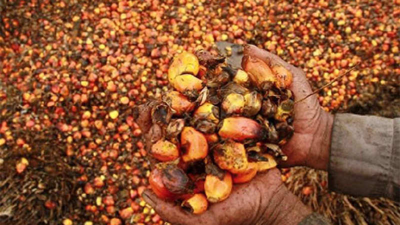 Palm oil import rises 21 58 per cent to 7,99,346 tonnes in May - The
