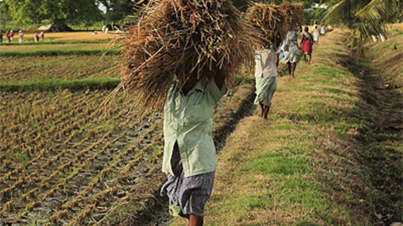 Venture capitalists foray into agri-business heralds good