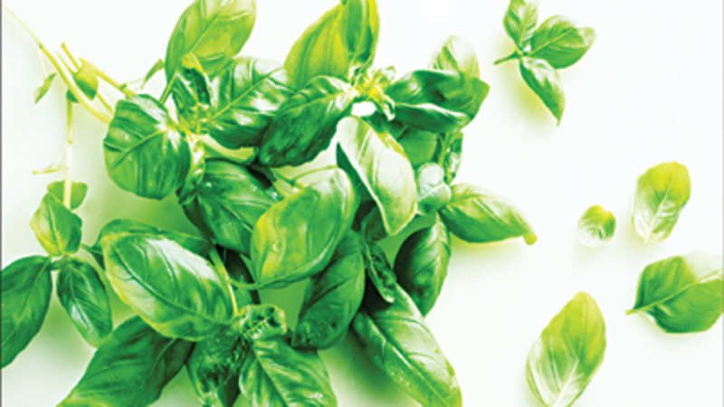 Basil, the aromatic green herb, has much to do with India