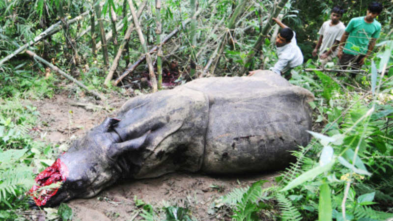 Kaziranga animals worst hit as floods ile ilgili görsel sonucu