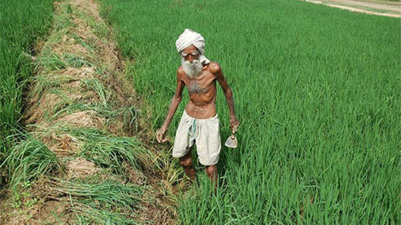 Agriculture experts call on farmers to focus on self