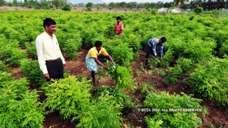 West Bengal starts organic farming activities across the
