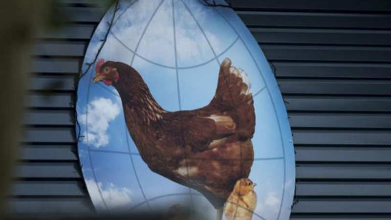 Rose Glen North Dakota ⁓ Try These Poultry Hatchery Business Plan In